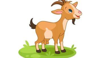 Brahmin and Goat