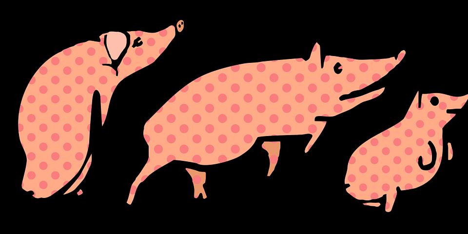 Three little pig