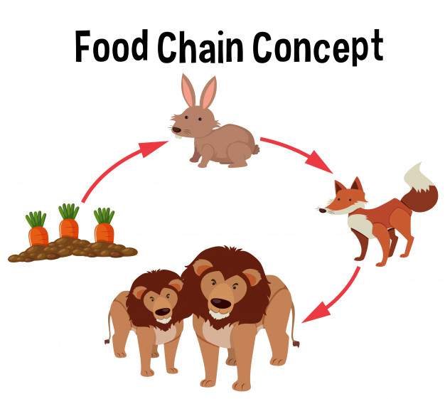 food chain concept